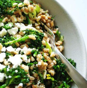 farro & broccolini salad | anutritionisteats.com